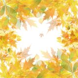 Autumn background of yellow leaves Stock Photo
