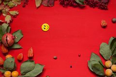 Autumn background yellow leaves of red berry fruits. 1 royalty free stock photos
