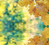 Autumn background with yellow leaves reflected in a water Royalty Free Stock Photos