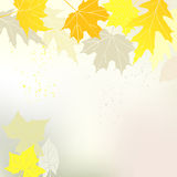 Autumn background with yellow leaves and a space for a text Royalty Free Stock Image