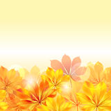Autumn background with yellow leaves Stock Image