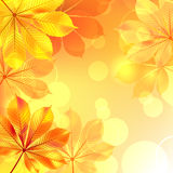 Autumn background with yellow leaves Royalty Free Stock Photos