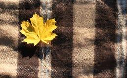 Autumn background, yellow maple leaf Royalty Free Stock Photos
