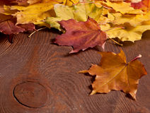 The Autumn background Stock Image