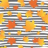 Autumn Background Yellow Maple Leaves Fall Season. Flat Vector Illustration Stock Image