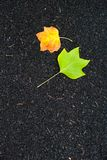 Autumn background - yellow marple leaves laying on black asphalt Royalty Free Stock Photography
