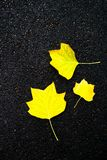 Autumn background - yellow marple leaves laying on black asphalt Stock Photo
