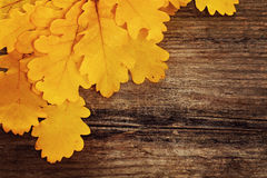 Autumn Background with Yellow Oak Leaves Royalty Free Stock Image