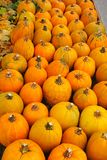 Autumn background of yellow pumpkins Royalty Free Stock Photos