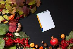 Autumn background yellow and Red leaves of berries fruits nuts. Autumn background yellow and Red leaves of fruits nuts royalty free stock photo