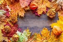 Autumn background of yellow and red maple leaves and dried roses. Copy space stock image