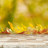 Autumn backgrounda Royalty Free Stock Images