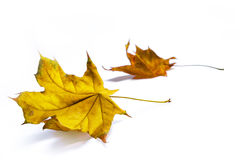Autumn backgrounds Royalty Free Stock Photo