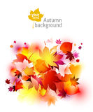 Autumn backgrounds Stock Image