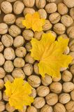 Autumn backgrounds Royalty Free Stock Images