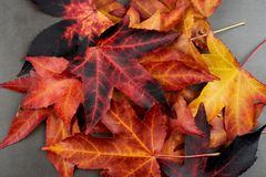 AUTUMN BACKGROUNDS. COLORFUL FALL LEAVES OVER A GREY CEMENT BOAR. D royalty free stock images