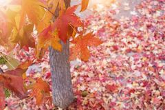 AUTUMN BACKGROUNDS. FALL LEAVES AROUND A TREE ON GROUND. BEAUTY NATURE stock photos