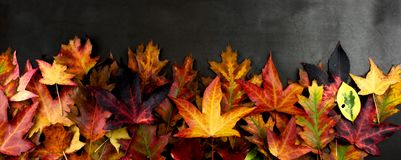 AUTUMN BACKGROUNDS, FRAME OR BORDER OF COLORFUL FALL LEAVES. HIG. H ANGLE VIEW AGAINST DARK BACKGROUND stock photo
