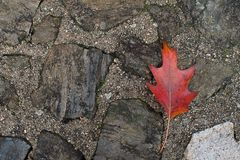 AUTUMN BACKGROUNDS.  RED COLORFUL LEAF FALL OVER  STONE GROUND. TECTURED EFFECT stock photo