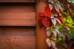 Autumn backgroung. With grape leaves Royalty Free Stock Photo