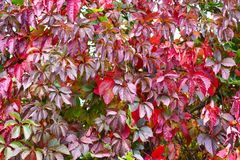 Autumn backgroung Royalty Free Stock Photography