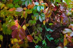 Autumn backgroung Royalty Free Stock Image