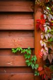 Autumn backgroung Stock Photo