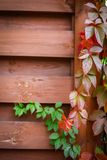 Autumn backgroung Stock Photography