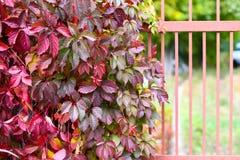 Autumn backgroung Stock Image