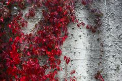 Autumn backgroung Royalty Free Stock Images