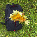 Autumn backpack of photographer Stock Image