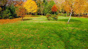 Autumn at backyard Stock Photography