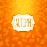 Autumn badge design Royalty Free Stock Image