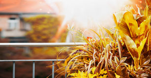 Autumn Balcony y planta de la terraza con el rayo de sol en el fondo de la ciudad fotografía de archivo