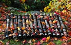 Autumn bamboo Royalty Free Stock Image