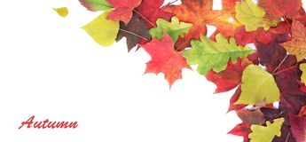 Autumn banner royalty free stock photo