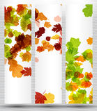 Autumn banner. It is an autumn banner Royalty Free Stock Photography