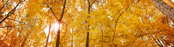 Autumn banner, background Stock Image