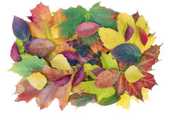 Autumn banner concept Royalty Free Stock Photography