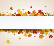 Autumn banner with maple leaves. Royalty Free Stock Photos