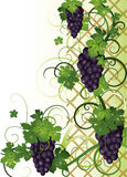 Autumn banner with grapes Royalty Free Stock Photography