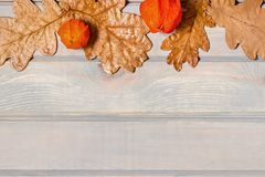 Autumn banner. Pumpkin, dried oak leaves and physalis. Autumn banner. Pumpkin, dried oak leaves and physalis on a light wooden background Royalty Free Stock Images