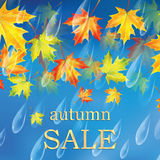 Autumn banner with raindrops and leaves of maple. Autumn sale Stock Image