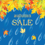 Autumn banner with raindrops and leaves of maple. Autumn sale Stock Photos