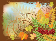 Autumn banner with red rowan berry and maple leave Stock Photos