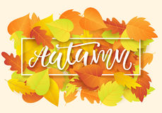 Autumn banner template with bright colorful fall leaves. Seasonal calligraphy. Poster, card, gift tag, label design. Vector illustration Stock Photography