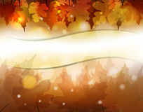 Autumn banner. Vector colorful autumn background, eps10 file, gradient mesh and transparency used Stock Photos