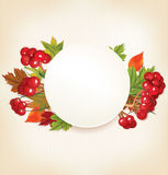 Autumn Banner With Viburnum e foglie variopinte Fotografia Stock Libera da Diritti