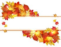 Autumn Banner With Leaves. Stock Photo