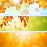Autumn Banners Stockfotografie